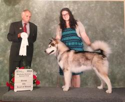 Maida Alaskan Malamute winning Best of Breed and Group 4th