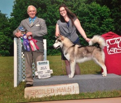 Maida the Alaskan Malamute winning her Canadian Championship